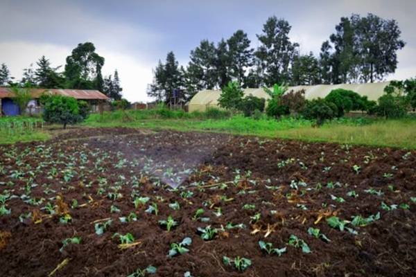 Giving Compass: Delivering more for Kenyan farmers