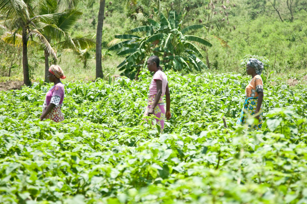 Haller Farmers: Restoring African Land for Over 50 Years